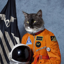 First cat in the space